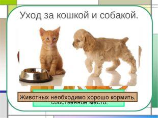 Уход за кошкой и собакой. У кошки и собаки должно быть собственное место. Жив