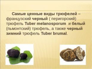 Самые ценные виды трюфелей – французский черный ( перигорский) трюфель Tuber