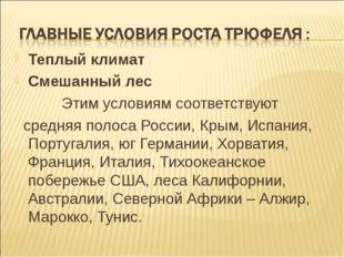 Теплый климат Смешанный лес Этим условиям соответствуют средняя полоса России