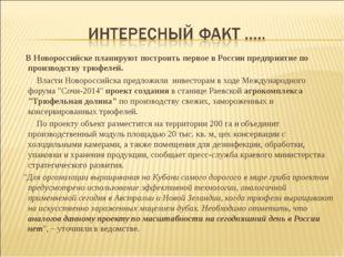 В Новороссийске планируют построить первое в России предприятие по производс