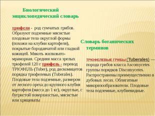 Биологический энциклопедический словарь трюфели- род сумчатых грибов. Образ