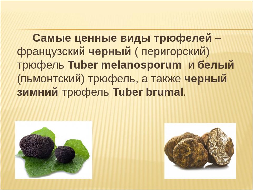Самые ценные виды трюфелей – французский черный ( перигорский) трюфель Tuber...