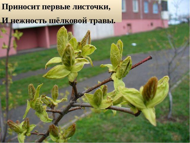 Приносит первые листочки, И нежность шёлковой травы.