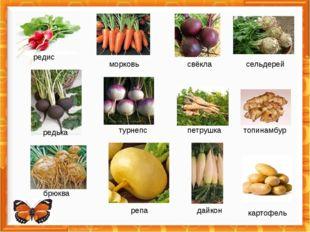редис морковь свёкла сельдерей турнепс редька петрушка топинамбур брюква реп