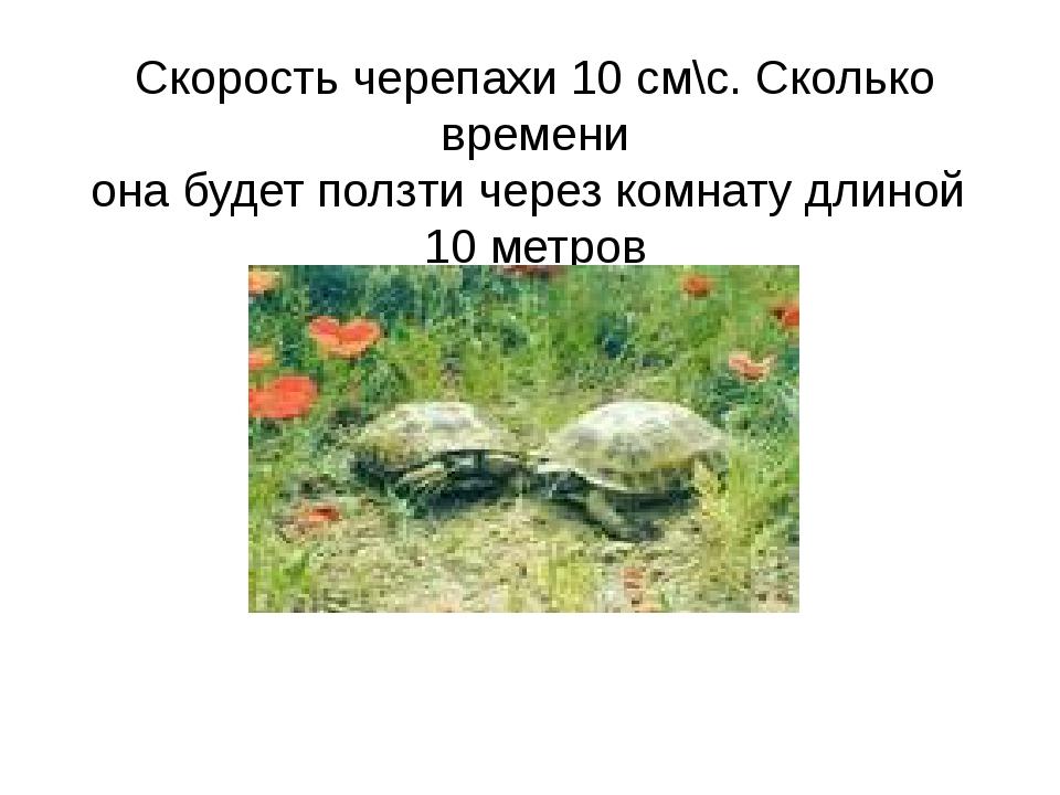 Скорость черепахи 10 см\с. Сколько времени она будет ползти через комнату дли...