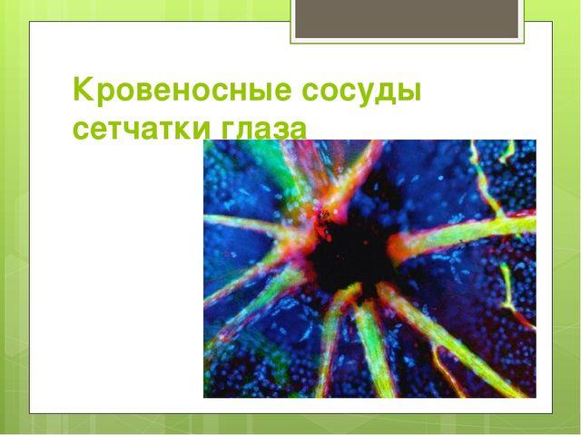 Кровеносные сосуды сетчатки глаза