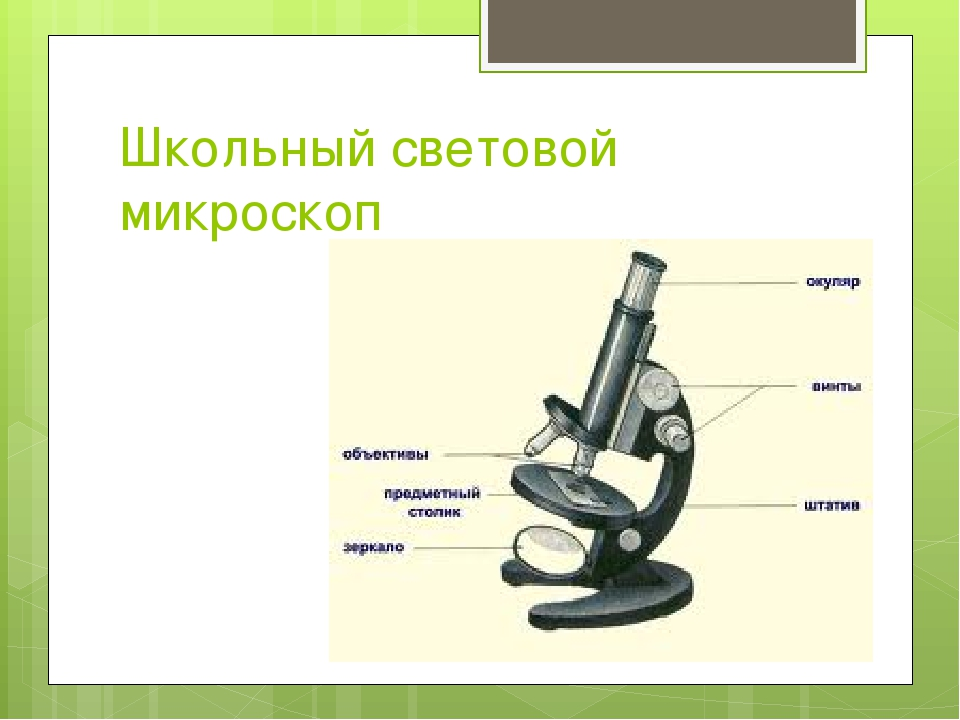 Школьный световой микроскоп
