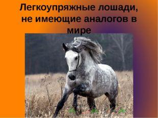 Легкоупряжные лошади, не имеющие аналогов в мире
