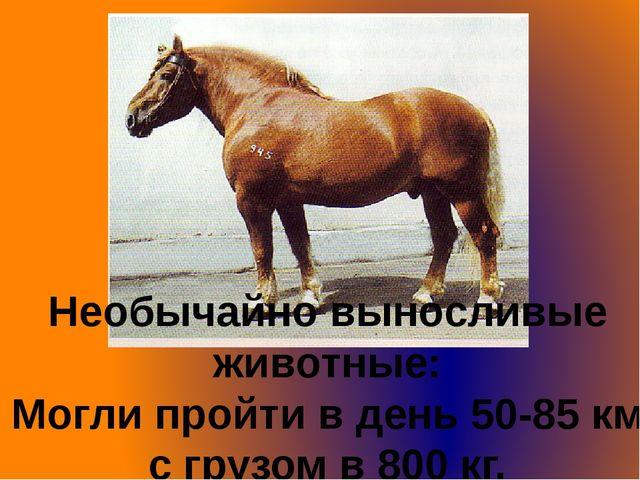 Необычайно выносливые животные: Могли пройти в день 50-85 км с грузом в 800 кг.