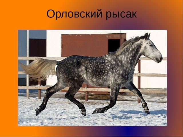 Орловский рысак
