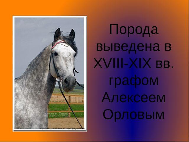 Порода выведена в XVIII-XIX вв. графом Алексеем Орловым