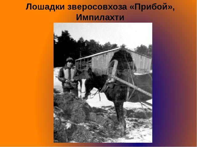 Лошадки зверосовхоза «Прибой», Импилахти