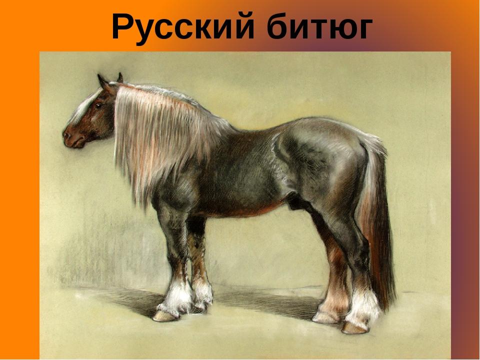 Русский битюг