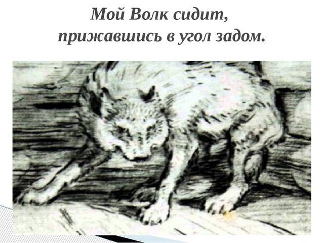 Мой Волк сидит, прижавшись в угол задом.