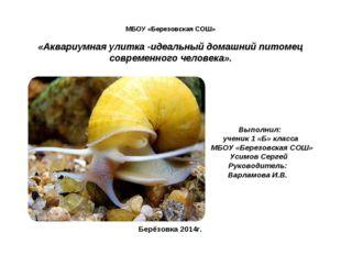 МБОУ «Березовская СОШ» «Аквариумная улитка -идеальный домашний питомец совре