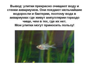 Вывод: улитки прекрасно очищают воду и стенки аквариумов. Они поедают мельчай