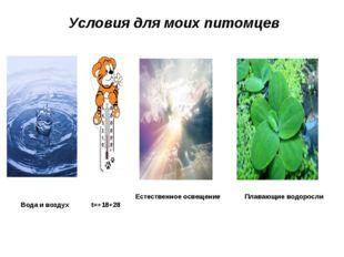 Условия для моих питомцев Естественное освещение Плавающие водоросли Вода и