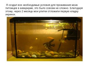 Я создал все необходимые условия для проживания моих питомцев в аквариуме, э