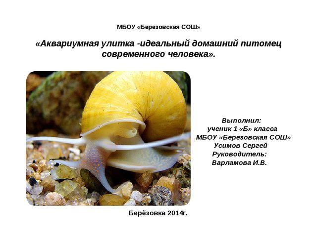 МБОУ «Березовская СОШ» «Аквариумная улитка -идеальный домашний питомец совре...