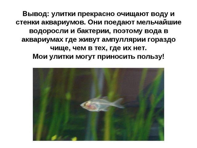 Вывод: улитки прекрасно очищают воду и стенки аквариумов. Они поедают мельчай...