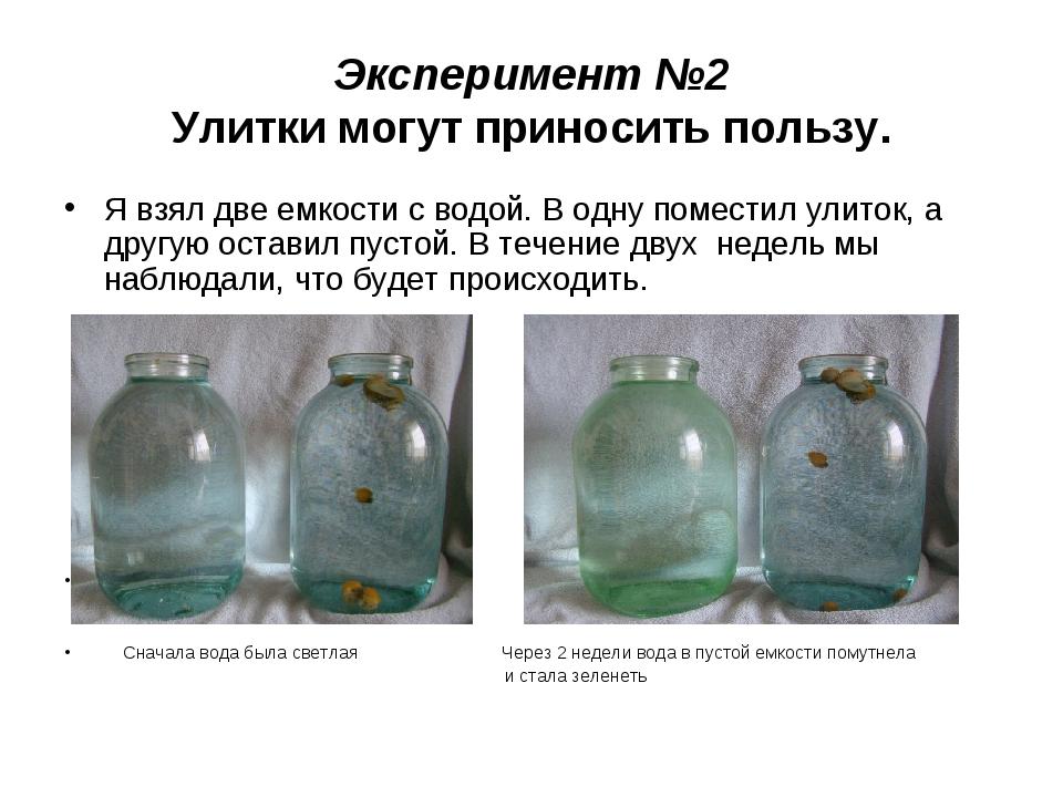 Эксперимент №2 Улитки могут приносить пользу. Я взял две емкости с водой. В о...