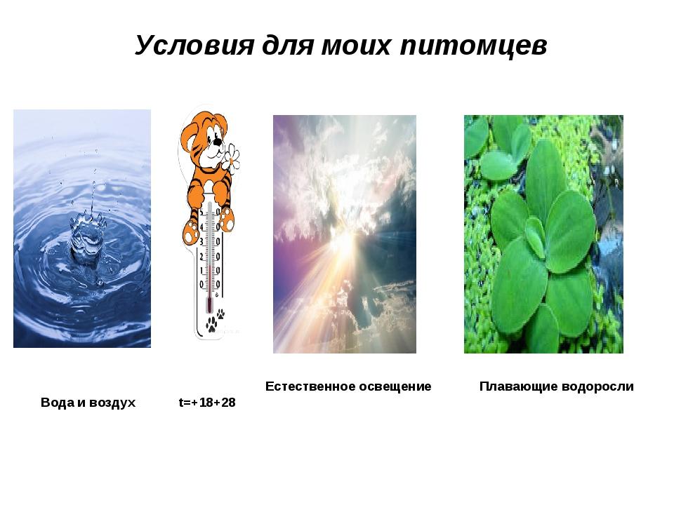 Условия для моих питомцев Естественное освещение Плавающие водоросли Вода и...