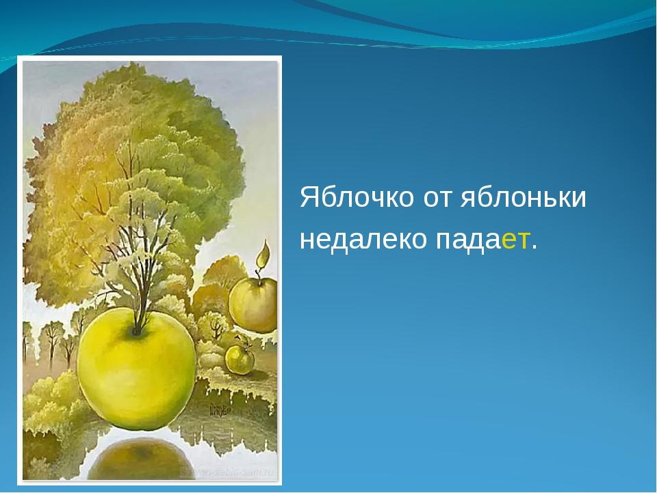 Яблочко от яблоньки недалеко падает.