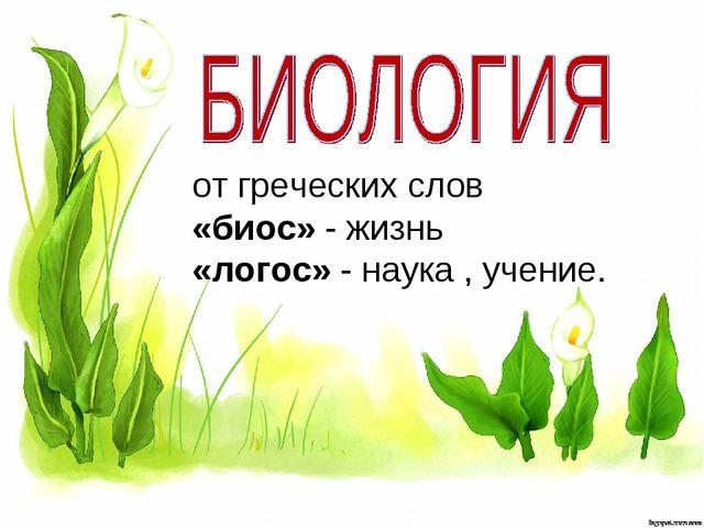 от греческих слов «биос» - жизнь «логос» - наука , учение.