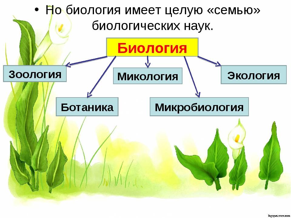 Но биология имеет целую «семью» биологических наук. Биология Зоология Ботаник...