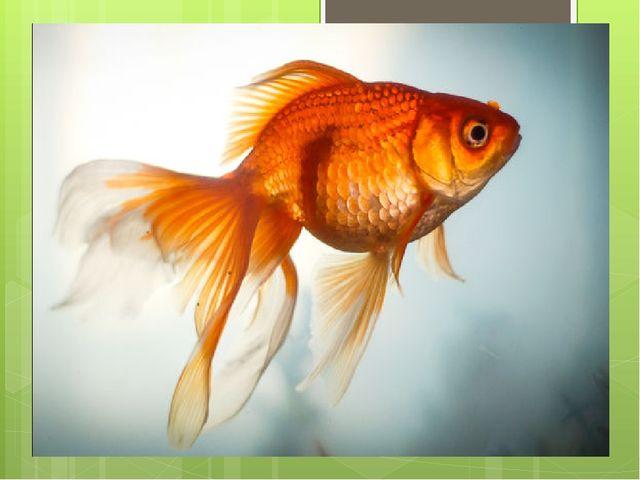 Пышный хвостик, плавники, Глазки чёрные у них, Чешуя горит-играет, Как ту рыб...