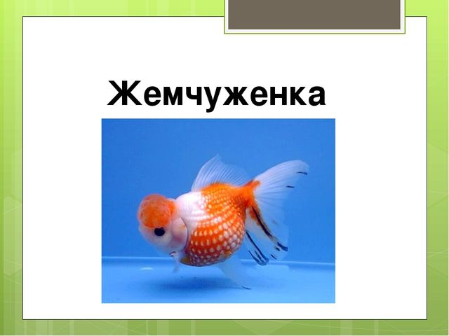 Жемчуженка