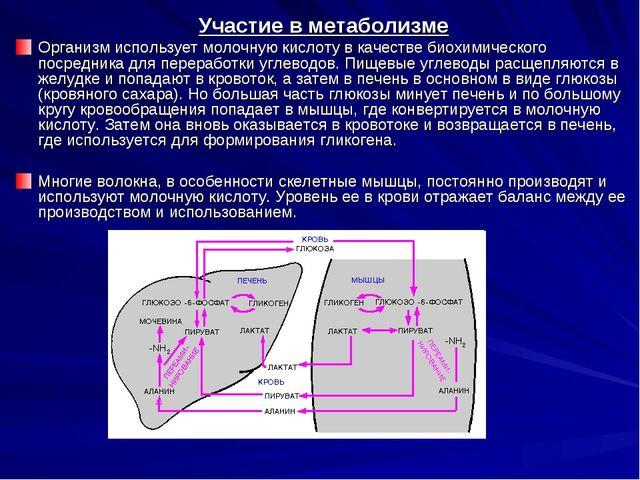 Участие в метаболизме Организм использует молочную кислоту в качестве биохими...