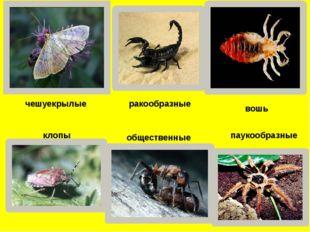 чешуекрылые ракообразные вошь клопы общественные паукообразные