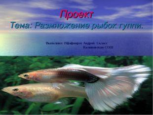 Проект Тема: Размножение рыбок гуппи. Выполнил: Пфафинрот Андрей 1 класс Кал