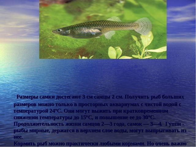 Размеры самки достегают 3 см самцы 2 см. Получить рыб больших размеров можно...