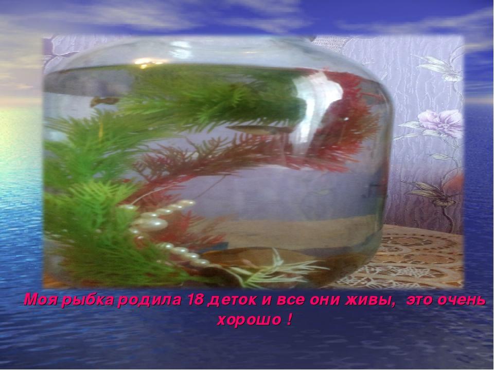 Моя рыбка родила 18 деток и все они живы, это очень хорошо !
