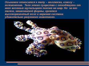 Осьминог относится к типу – моллюски, классу – головоногие. Тело этого сущест