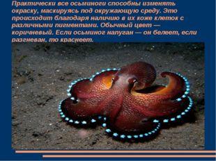 Практически все осьминоги способны изменять окраску, маскируясь под окружающу