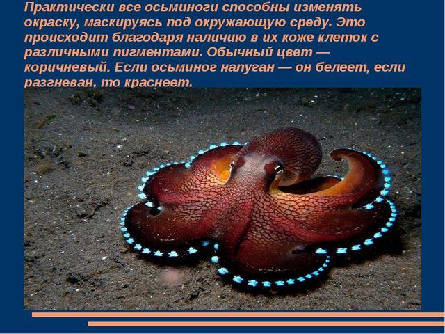 Практически все осьминоги способны изменять окраску, маскируясь под окружающу...