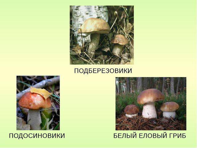 Конспект урока рисование с натуры разных видов грибов белый подосиновик мухомор