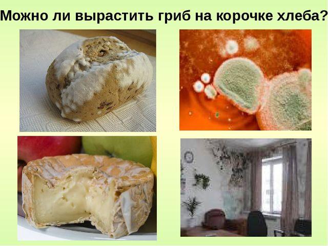 Можно ли вырастить гриб на корочке хлеба?