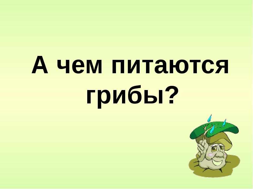 А чем питаются грибы?