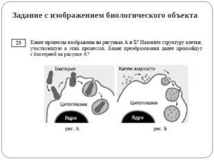 Задание с изображением биологического объекта