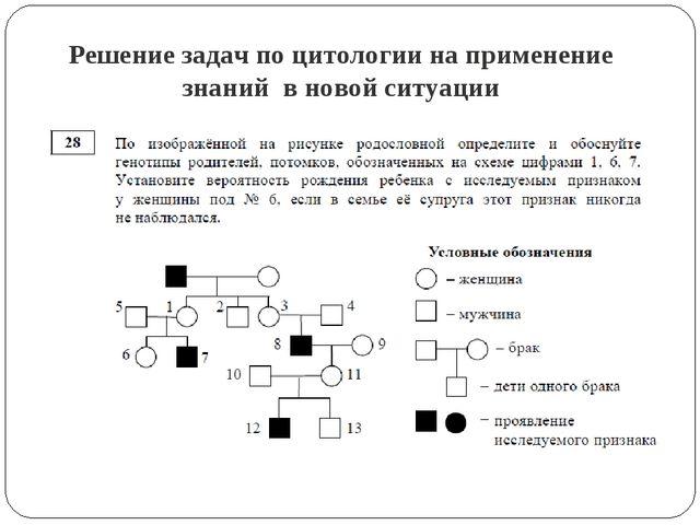 Решение задач по цитологии на применение знаний в новой ситуации
