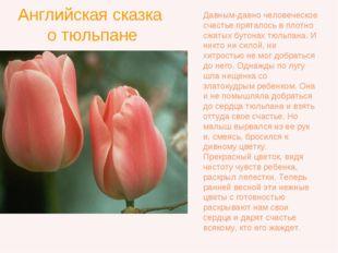 Английская сказка о тюльпане Давным-давно человеческое счастье пряталось в пл