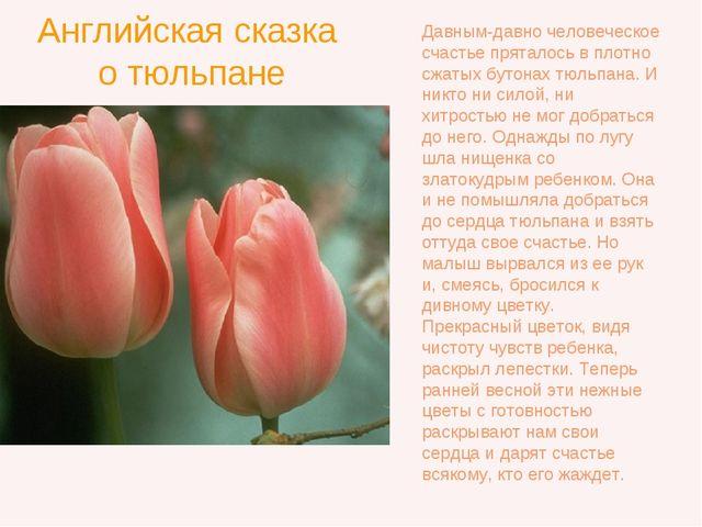 Английская сказка о тюльпане Давным-давно человеческое счастье пряталось в пл...
