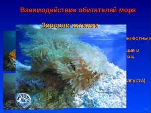 * Взаимодействие обитателей моря Водоросли пища и дом для мелких животных; до