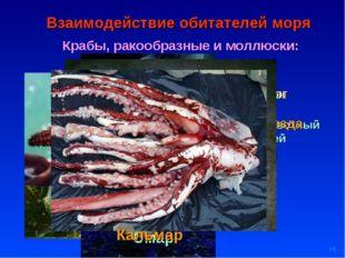 * Взаимодействие обитателей моря Крабы, ракообразные и моллюски: Планктон кор