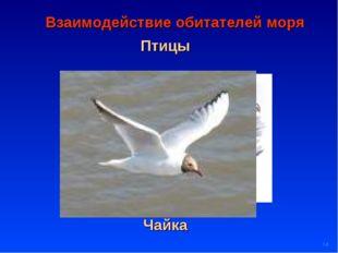* Птицы Взаимодействие обитателей моря Баклан Чайка