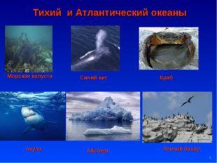 * Тихий и Атлантический океаны Морская капуста Синий кит Краб Акула Птичий ба